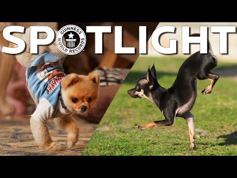 Enter Konjo, the fastest dog on two front paws - Spotlight
