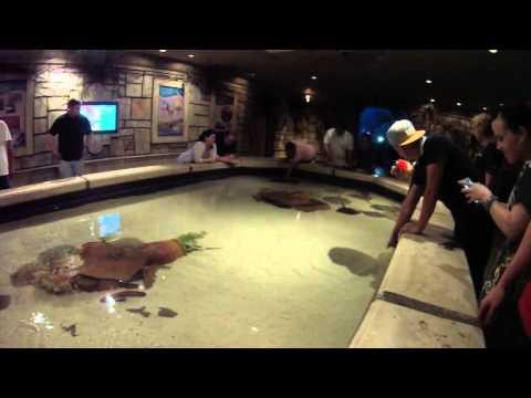 Shark Reef Aquarium   FULL TOUR!! HD POV Mandalay Bay, Las Vegas