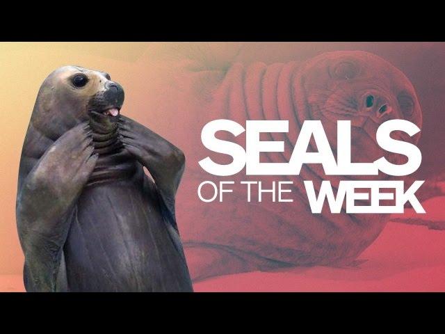 Big Seals, Little Seals, & More! - IGN Daily Fix
