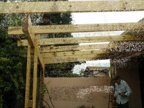 Techito para el c3 youtube for Ideas para hacer un techo en el patio