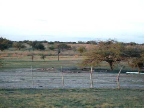 Vizcachas 2010 de dia  Corrientes
