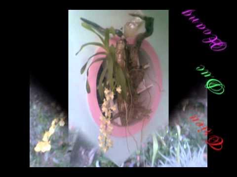 Lien Khuc Tuan Vu - Huong Lan video