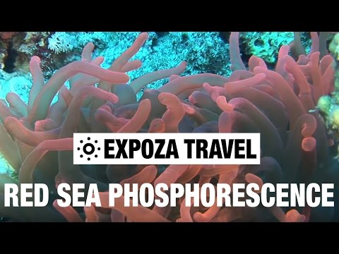 Red Sea Phosphorescence Vacation Travel Video Guide
