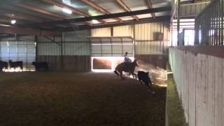Kisses- Jared Lesh Cowhorses