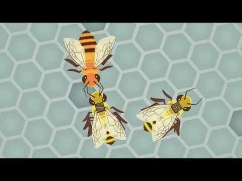 Global Initiative for Honey bee Health: How do the bees' backpacks work?