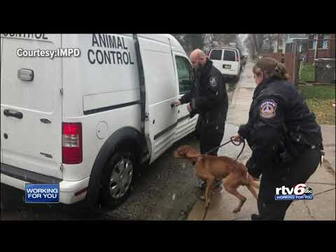 IMPD officers rescue, feed cold & hungry pup on Indy's east side