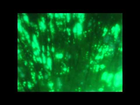 16mm Pinhole Movie Camera footage:  from The Letters Project- Light & Chemical Correspondence