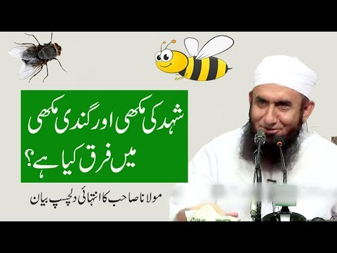 (Best) Maulana Tariq Jameel Latest Bayan about Diffrence Between Honey Been & Fly   7th Oct 2017