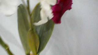 artificial flower orchid cattleya