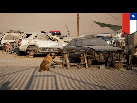 Anjing menyusui seorang anak yang kelaparan - Tomonews