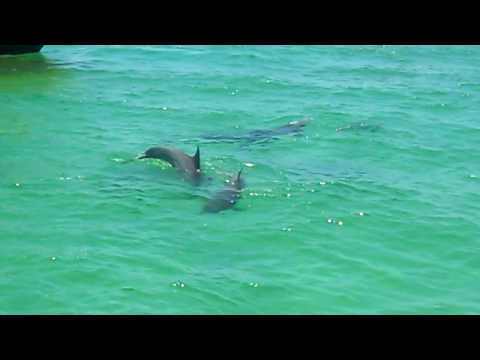 Emerald Green Waters and Playful Dolphins in Destin, FL-Summer 2010