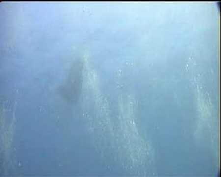 Manta Ray Jumping Jumping Giant Manta Ray
