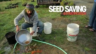 Seed saving and stratification - A Permaculture Skills Excerpt