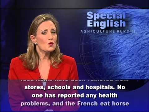 Europe's Horse Meat Problems