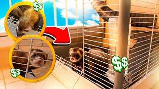 NOSSO NOVO ANIMAL DE ESTIMAÇÃO !! *muito caro* ‹ Ine ›