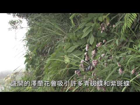 陽明山國家公園_步道上的小動物