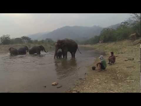 Bath time with Navann - Elephant Nature Park