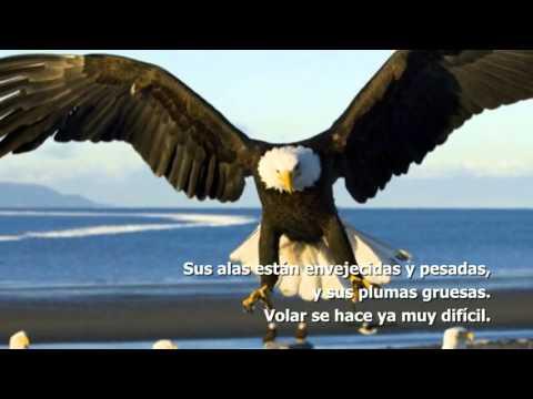 Motivacion - El cambio del Ãguila [HD].wmv