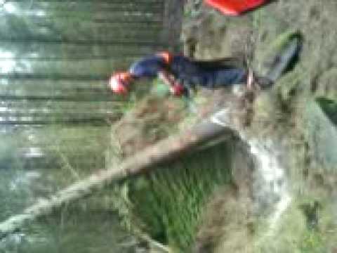 Ellison fells windblown tree