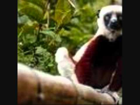 25 primate species in Africa, Asia reported on brink of extinction from deforestation, hunting