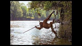 Thế giới động vật | Những cuộc đi săn loài hổ hoang dã