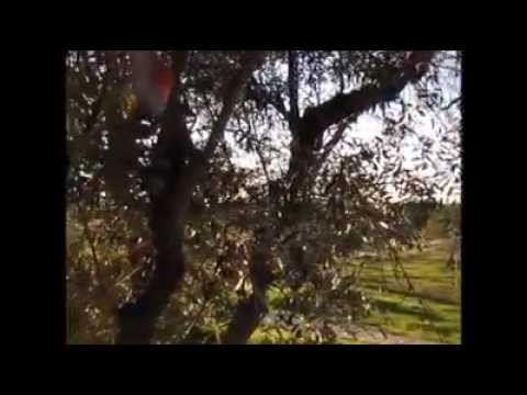 Mo-I-Rana Moirana & Culpeper's Orchard - Loners & Lovers + Second Sight