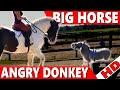 Big Horse vs Little Donkey