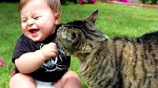 CATS AND BABIES ★ MOST Crazy Cats Annoying Babies   Funny Baby And Animals Compilation