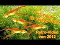 HD Guppys - 12 Tipps für Zucht, Pflege, Haltung, Dokumentation, Aquarium, Fische, Guppy