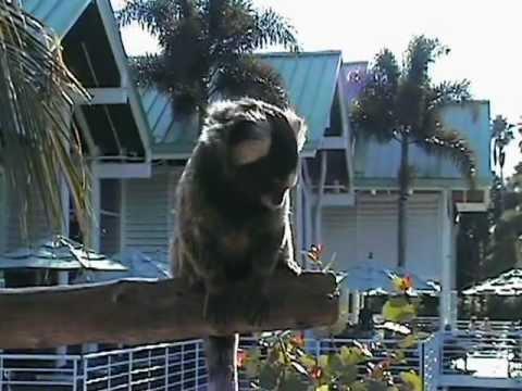 SeaWorld Orlando – Ospiti animaleschi al parco – Florida