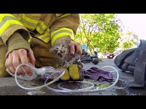 Fun Video Friday: Firemen And Kittens Edition