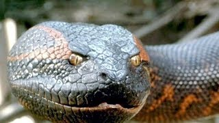 ANACONDA - Legend And The Truth About The Giant Anaconda