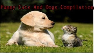 Happy Cats And Dogs Funny Compilation- Funny Cats And Dogs