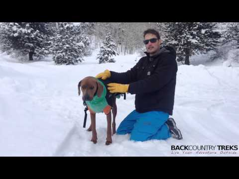 For Dogs: The Great White North Winter Coat by Chilly Dogs [Review]