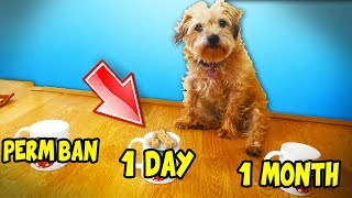 Download Lagu MY DOG CHOOSES HOW LONG TO BAN MINECRAFT HACKERS Gratis STAFABAND