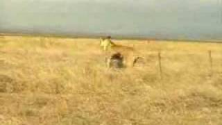 خنزير بري يتصارع مع اسد سبحان الله