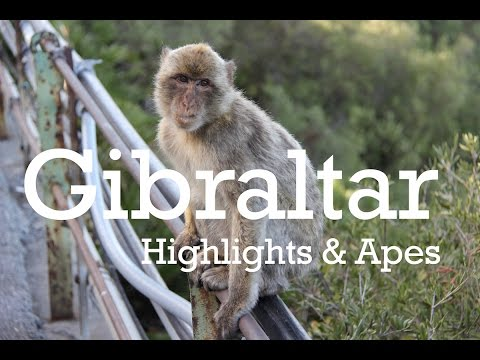 Gibraltar Highlights with Barbary Apes and babies