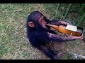 TRY TO STOP LAUGHING at these AWESOME FAILS - Hilarious FUNNY FAIL compilation