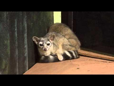 Llegan nuevas especies al zoológico de Nuevo Laredo