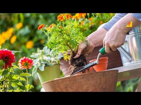 Clique e veja o vídeo Curso a Distância Planejamento, Implantação e Manutenção de Jardins