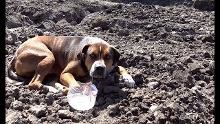 Hope For Paws: Abandoned dog in a construction site wouldn