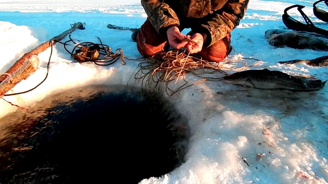 Как промысловики ловят рыбу зимой на енисее видео