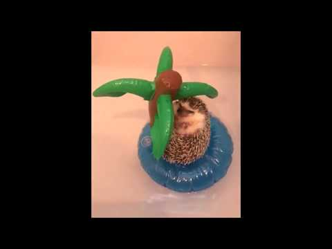 FUNNY ANIMAL VIDEOS - Pets are Awesome!