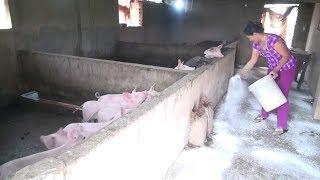 Nghệ An phát hiện thêm hai ổ dịch tả lợn châu Phi
