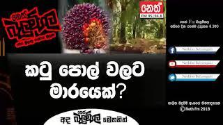 Balumgala 2018-05-30 Coconut Kes