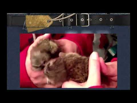 Супер Смешные Животные и Зеркало! (1) Лови улыбку) Угарный ржач!Смешные приколы с животными