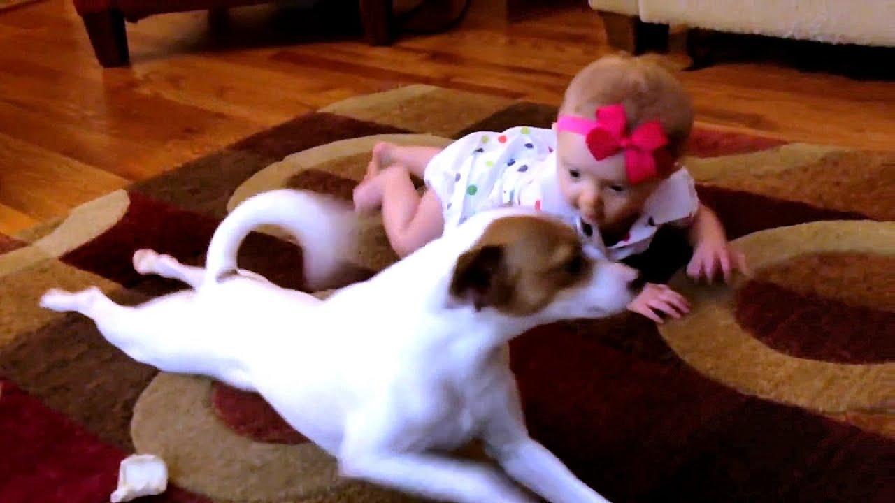 Un perro ense a a un beb c mo gatear youtube - Como banar a un perro ...
