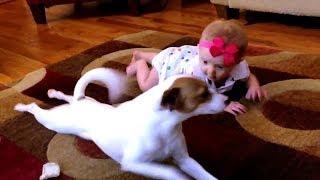 El video de este perrollamado Buddy, enseñando a gatear a la bebe de la casa se ha vuelto viral enInternet. Gracias a esta magistral lección canina, la pequeña seguro aprenderáa gatear muy pronto. Además, el gracioso perrito ha demostrado que las mascotaspueden llegar a ser muy cariñosas, tiernas y entregadas.