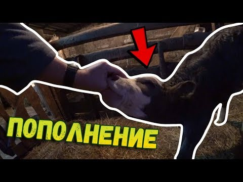 ✅У нас ПОПОЛНЕНИЕ!!! // Отелилась корова // Купили гусей