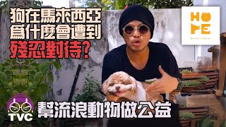 Haram tak haram? To our NEW MALAYSIA government: DOGS need you! HOPE希望護生園慈善晚宴@Kepong